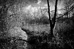 Follow the path... (Edwin_Abedi) Tags: ohio blackandwhite bw contrast forest landscape mood artistic