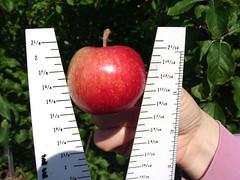 MM.111 EMLA Apple Measure 2
