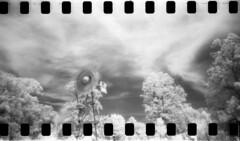 west to east (er_code_blue) Tags: ohio bw film analog 35mm holga lomo lomography infrared diafine aura hoya sprockets efke r72 dawesarboretum homedevelopment ir820
