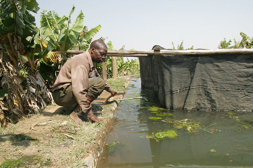 Aquaculture, photo by Stevie Mann, 2007