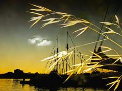 sunset canada silhouette golden bay bamboo zen zedzap