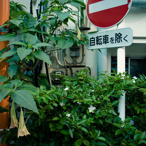 Angel's Trumpet No Entry Corner, Ebisu