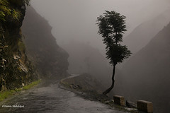 KKH High Way. (Mountain Photographer) Tags: road pakistan mist tree altitude silk kkh himalaya himalays highaltitudes alttitude northranarea rizwansaddique gettyimagespakistanq2 highalttitude