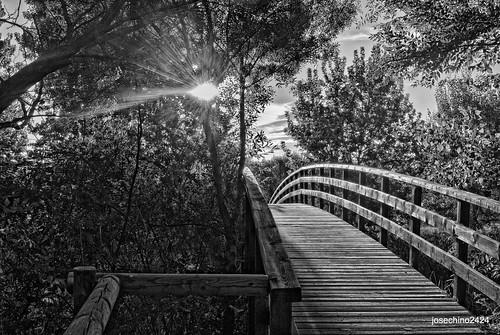 La luz que alumbra el camino a seguir