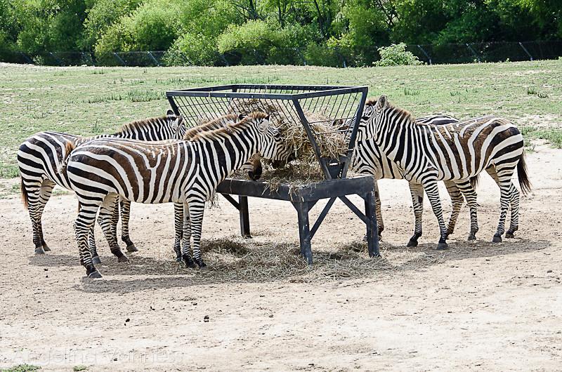 Cape May Zoo26-Edit