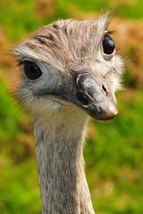 WHATS UP!!! (JRT ) Tags: portrait sun holiday bird grass neck zoo scotland eyes nikon eyelashes dundee beak feathers fast sunny camperdowncountrypark whatsup d300s johnwarwood flickrjrt