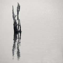 Deadwood (Dougally) Tags: wood reflection water nest driftwood