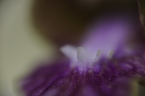 Testing, Reverse 50mm onto extension tubes