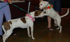 Dogs Hugging at Bow Wow Luau (StFrancis2) Tags: cats wow luau bow meow 2011