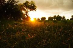 Sunset () Tags: sunset nature taiwan  tainan