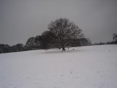 Neve!!! (55)
