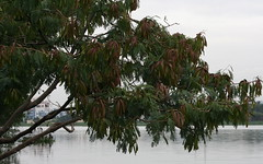 Forest outgrowth (Nagarjun) Tags: birds bangalore herons madivala madiwala spotbilledpelicans egerts