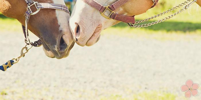 Halifax NS Wedding Portrait Horse Equine photography - Splash & Donna - Nicole Payzant -  (24 of 26)