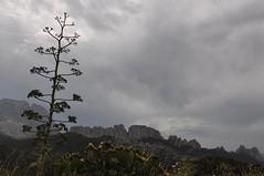 Guhyaloka skies 8