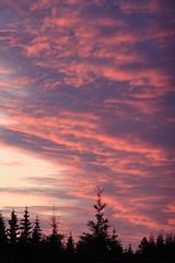 Solnedgang (bjarne.stokke) Tags: canon skog sverige juli solnedgang 135mm kveld 500d 2011 ef135mmf2lusm doubleniceshot tripleniceshot mygearandme aboveandbeyondlevel1 photographyforrecreationclassic