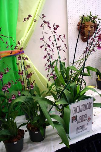 choc-orchids