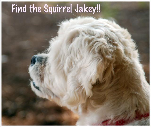 FTS-Jakey
