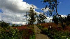 ... (Arkadious) Tags: summer plants color colour nature germany landscape hessen natura hesse przyroda lato krajobraz