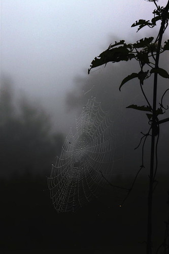 Foggy Web