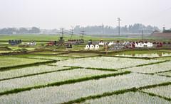 111_LAO88340022 (TC Yuen) Tags: vietnam sapa hmong terracefarming locai