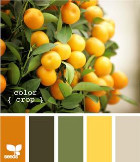 DesignSeedColorCrop2(5)