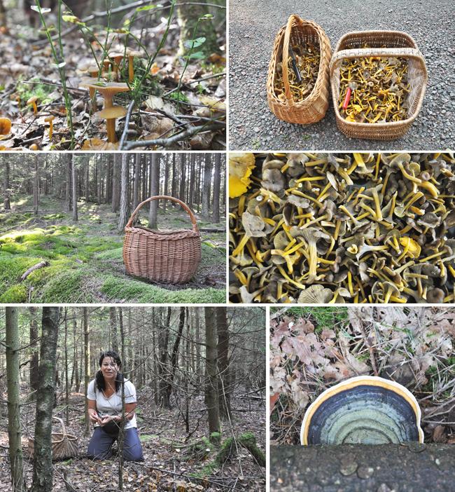 Marilia i svampskogen