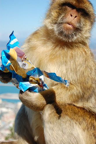 Monkey with Memry's Chips