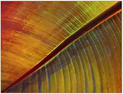 The Magic of Nature (Stella Blu) Tags: stella abstract texture nature leaves leaf blu stellablu digonal nikkor105mmf28gvrmicro nikond5000 storybookwinner pregamewinner