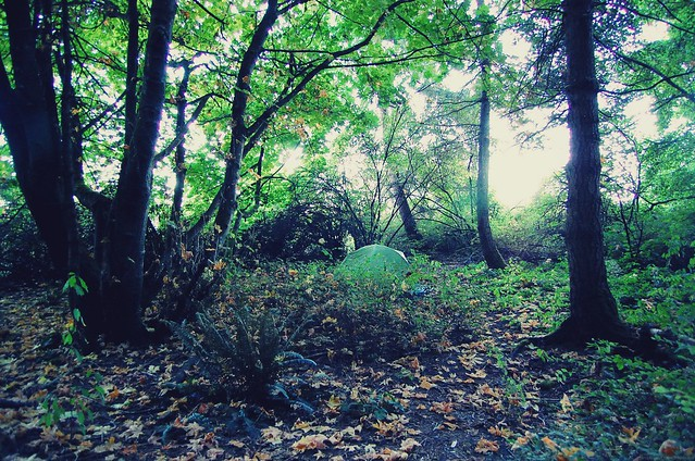 tent in woods.