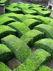 UK - Old Washington - Decorative Box Hedge in Garden (JulesFoto) Tags: uk england washington tyneside tynewear boxhedge plaitedhedge