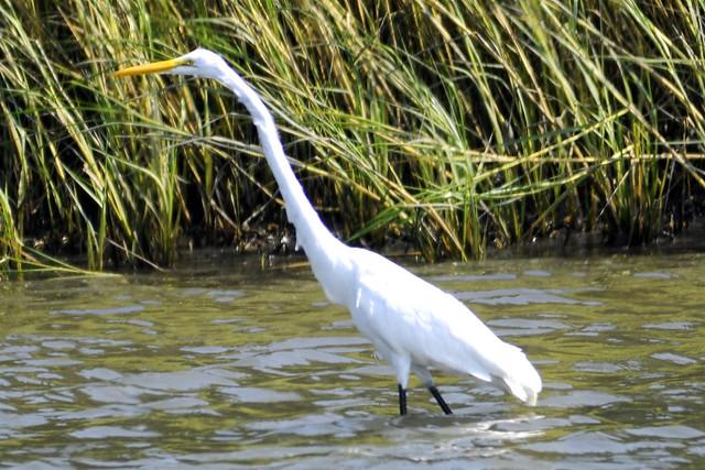 egret learys 2011