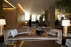 Hero Dog Awards 2011 - Ricochet at Beverly Hilton Hotel