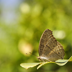 Butterfly (e.nhan) Tags: life art nature leaves closeup butterfly leaf dof bokeh butterflies backlighting enhan
