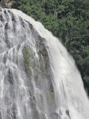 IMG_0178 (Nelson Luiz Wendel) Tags: brazil brasil mar waterfall rainforest do wasserfall air maji talon tropical slap serra foss juga cascade floresta cachoeira ya terjun ecoturismo   cascada joinville  cascata vesiputous eas waterval  rhaeadr fervenza vattenfall vodopd elale wodospad  urjauzia vandfald itapocu   vodopad nc vzess thc ecossistema krioklys maporomoko mata atlntica denskritums lal   ujvar    regenvaldt regenwaldt    catarracta  kaskad