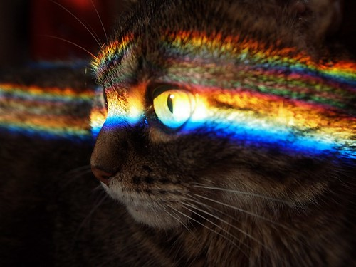 rainbow cat face