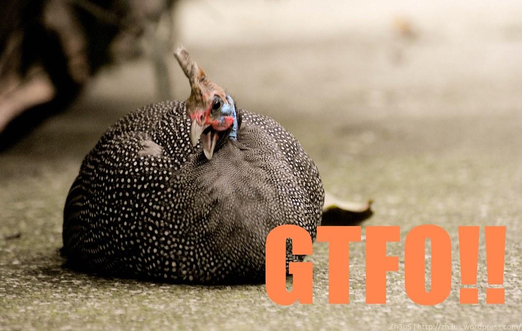 Jurong Birdpark (63 of 89)