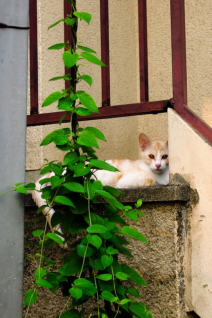 Today's Cat@2011-08-18