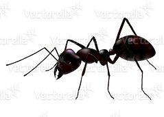vector ant (Cidepix on Vectorella) Tags: red brown white black detail macro nature animal closeup illustration work bug insect design community head drawing background computergenerated jaw ant leg cartoon social ants worker vector antenna isolated colony anthill emptyspace whitebackgroud cidepix