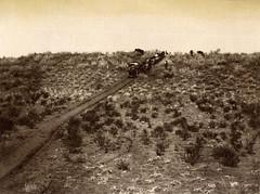 Oxen & waggon, Kalahari