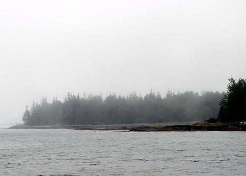 Maine - trees