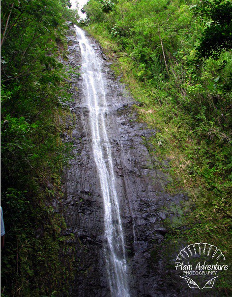 Manoa Falls 3
