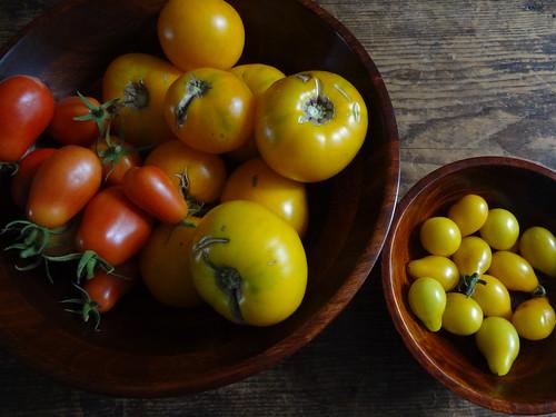2011.08_garden tomato harvest