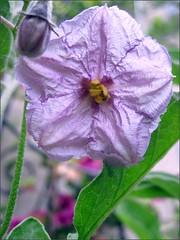 Purple flower from below