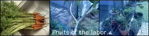 Fruits of composting