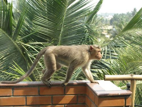 apina-verannalla by Anna Amnell