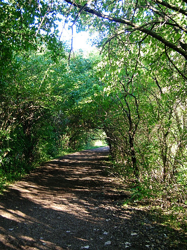 pathway covered by trees