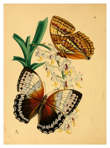 001-The cabinet of oriental entomology…1848- John Obadiah Westwood