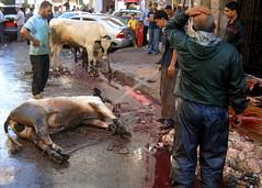 Slaughter of Animals in the street Alexandria Egypt (rougetete) Tags: alexandria mediterranean northafrica egypt eidaladha streetbutcher streetslaughter slaughterofanimals