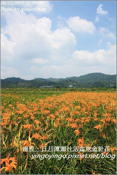 南投魚池_頭社活盆地金針花20110821_I1331