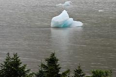 Solitary Ice Floe (meg21210) Tags: cruise trees sea ice water alaska ship glacier juneau mendenhall floe goldenprincess tidewater